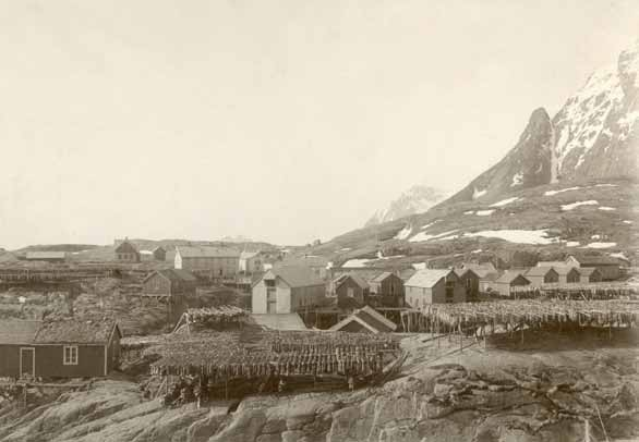 1000 år Å i Lofoten: Skreien er hengt på hjell til tørk, 1915. Å, Lofoten: The cod are hung out to dry on fish racks, the year is 1915.