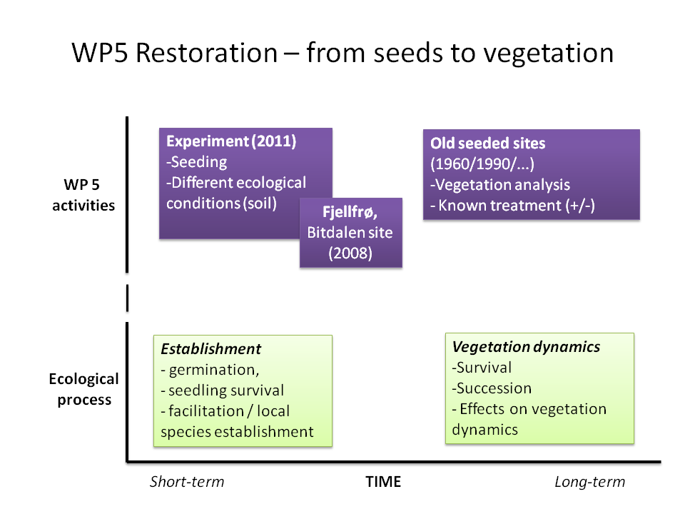 is an appropriate measure and its implications for long term vegetation development. In WP 5 we study the ecological possibilities and constraints of using native seeds in restoration projects.