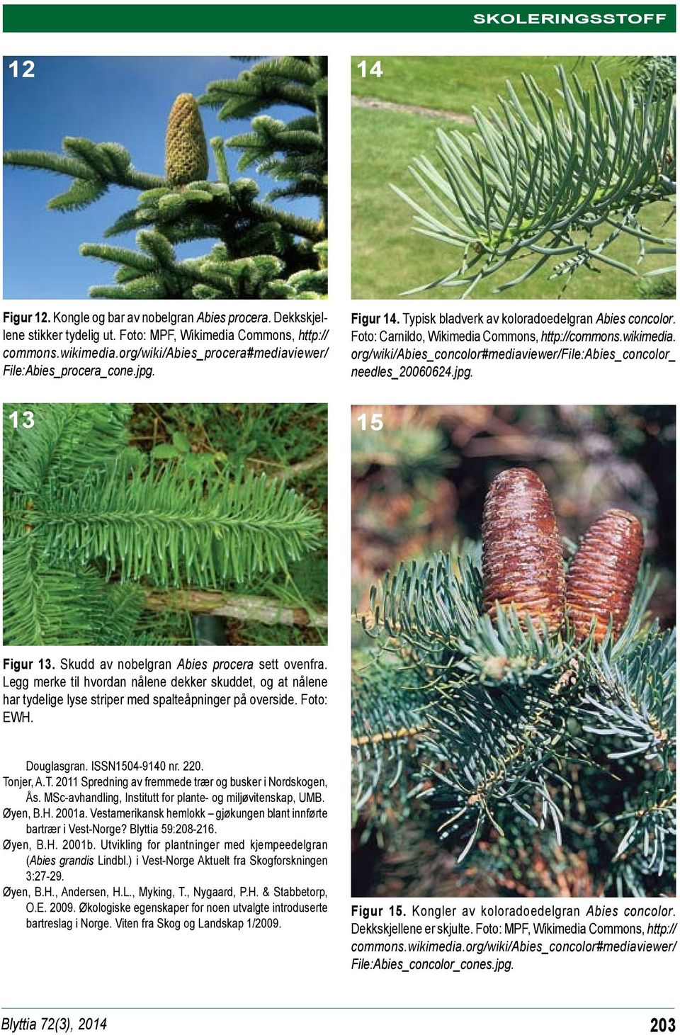 org/wiki/abies_concolor#mediaviewer/file:abies_concolor_ needles_20060624.jpg. 13 15 Figur 13. Skudd av nobelgran Abies procera sett ovenfra.