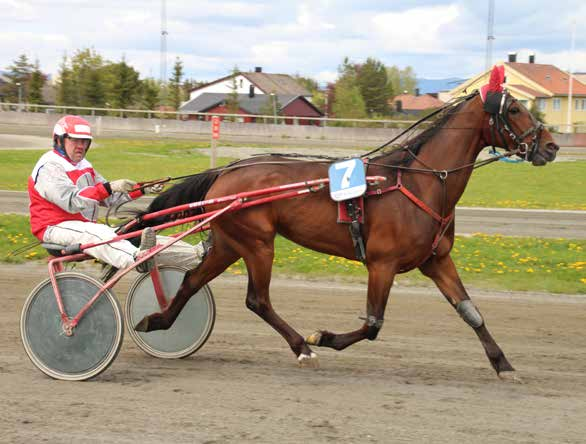 9 10 2015: 4-0 -0-0 -3-21.2v -6.000 2014: 2-0 -0-0 -0-22.3v -0 Shiny Diamond 8 21,2m 6.000 6 år Brun HP v. Super Nick (US) e. Zarina Sund v.