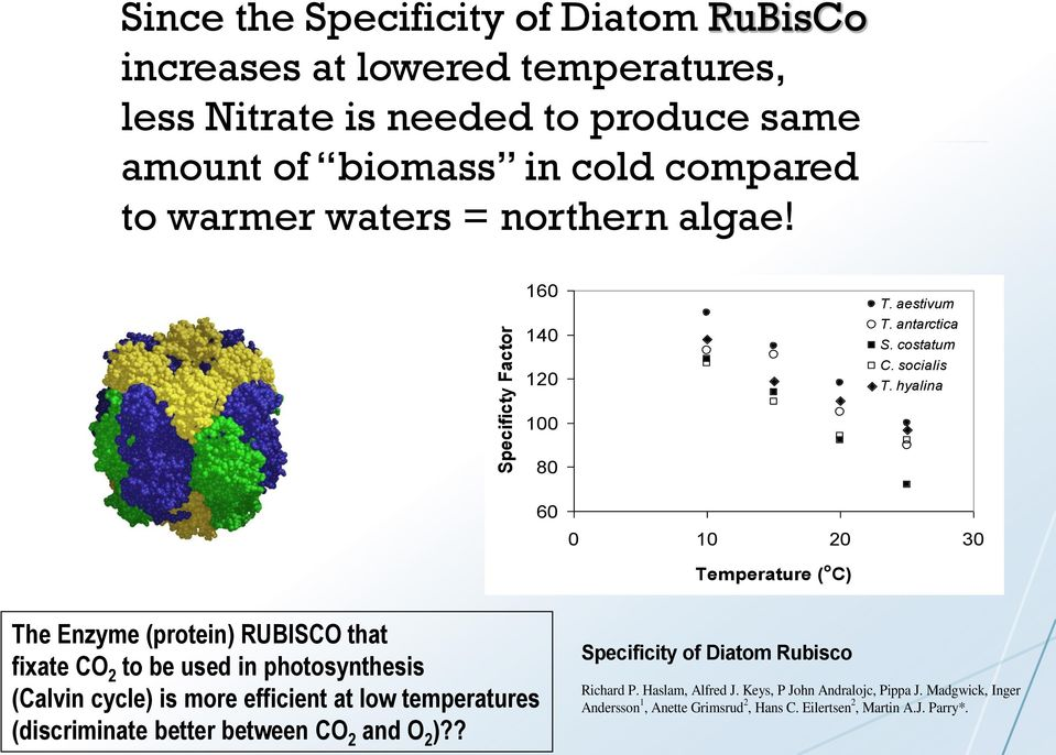 hyalina 100 80 60 0 10 20 30 Temperature ( o C) The Enzyme (protein) RUBISCO that fixate CO 2 to be used in photosynthesis (Calvin cycle) is more efficient at low