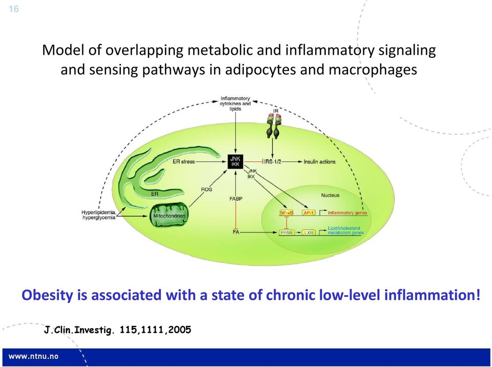 macrophages Obesity is associated with a state of