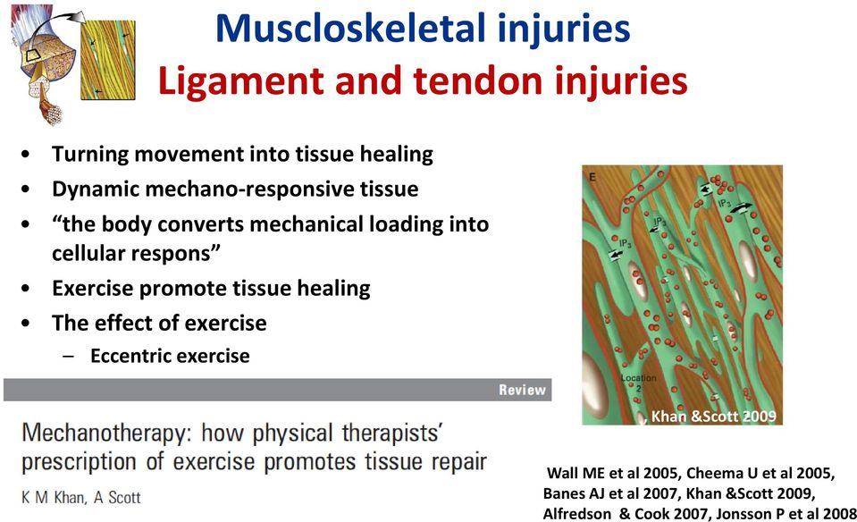promote tissue healing The effect of exercise Eccentric exercise, Khan &Scott 2009 Wall ME et al