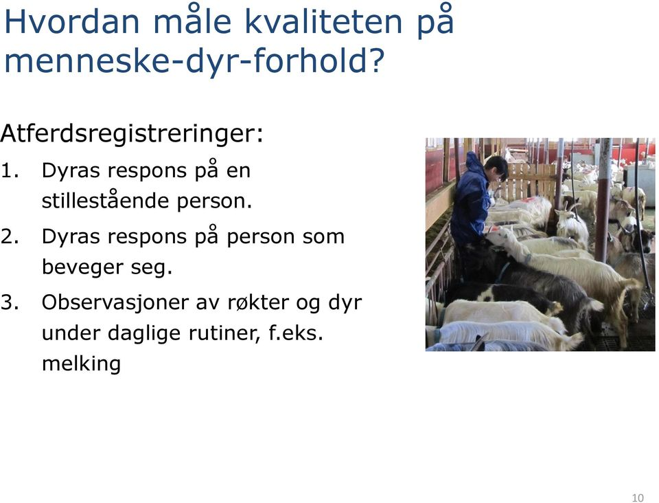 Dyras respons på en stillestående person. 2.