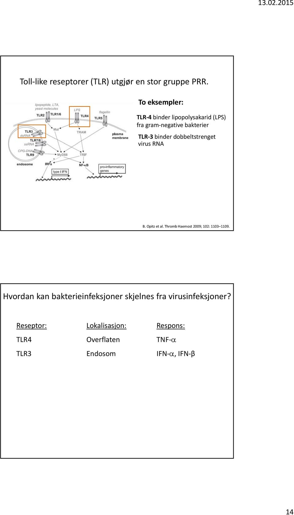 dobbeltstrenget virus RNA B. Opitz et al. Thromb Haemost 2009; 102: 1103 1109.