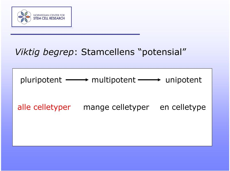 multipotent unipotent alle