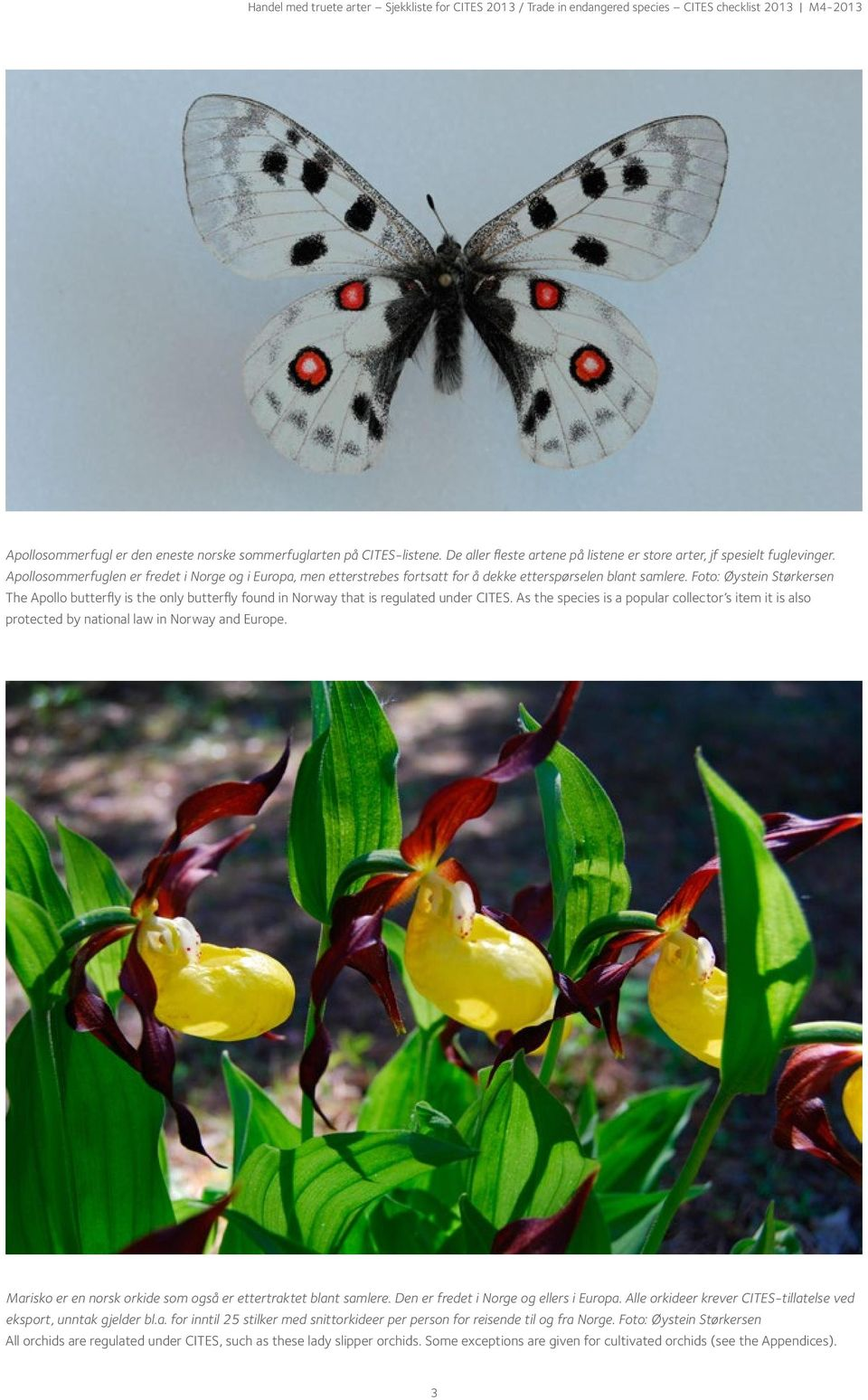Foto: Øystein Størkersen The Apollo butterfly is the only butterfly found in Norway that is regulated under CITES.