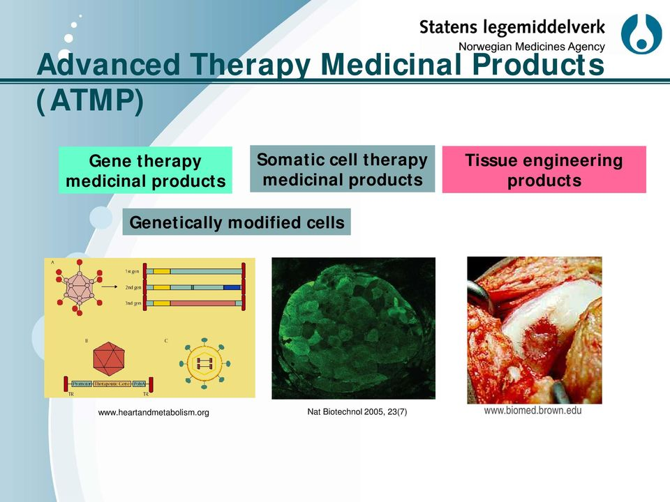 Tissue engineering products Genetically modified cells www.