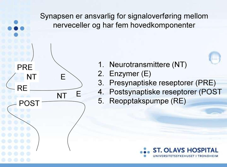 E 1. Neurotransmittere (NT) 2. Enzymer (E) 3.