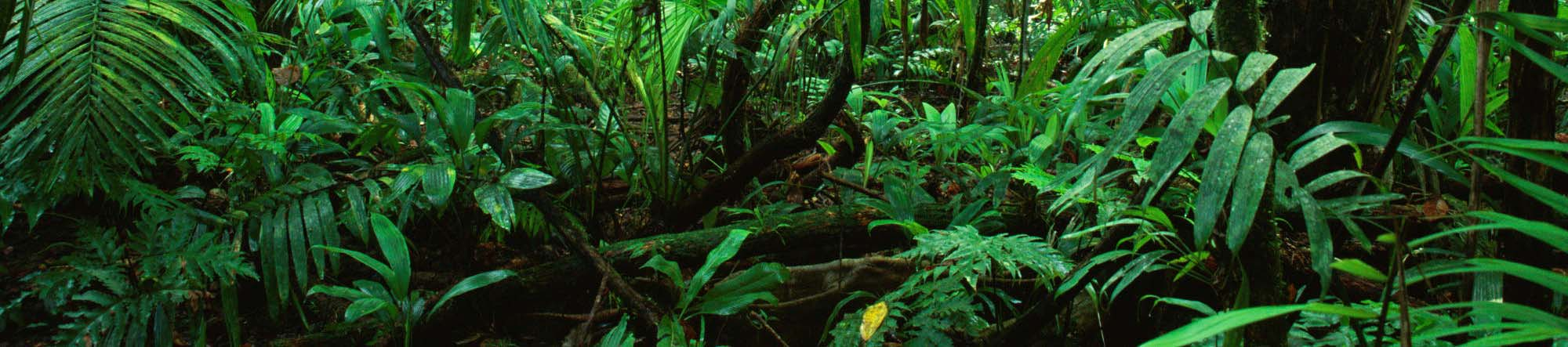 The medical literature can be compared to a jungle.