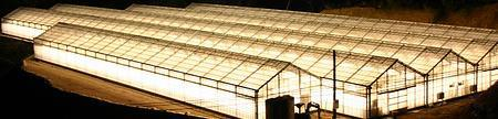 Use of light in greenhouse crop disease management Samarbeide mellom Bioforsk