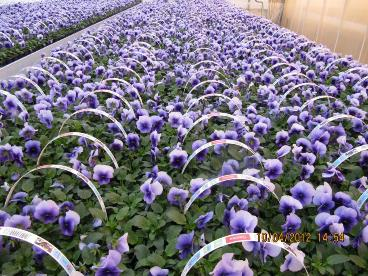 Greenhouse environment Rain free Warm Humid Less air movement Plant production High economic value Monoculture High planting