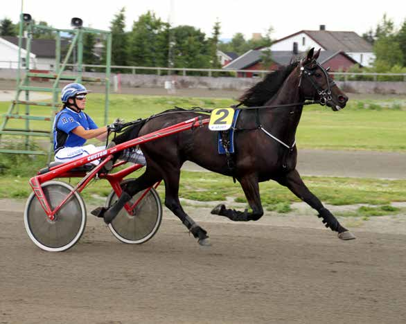 9 2015: 4-0 -0-1 -1-16.4a -6.000 2014: 0-0 -0-0 -0-0 L.J.'s Andy Hall 9 21,0m 16,4am 6.000 3 år Svartbrun H v. Andover Hall (US) e. Kerryn v.