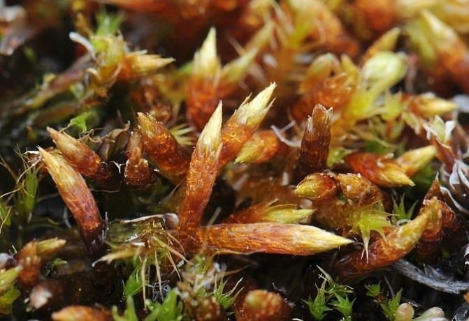 Gunnar Austrheim Kristian Hassel, James Speed Could functional plant traits be used to examine how bryophytes respond to changes in grazing and climate in alpine environments?