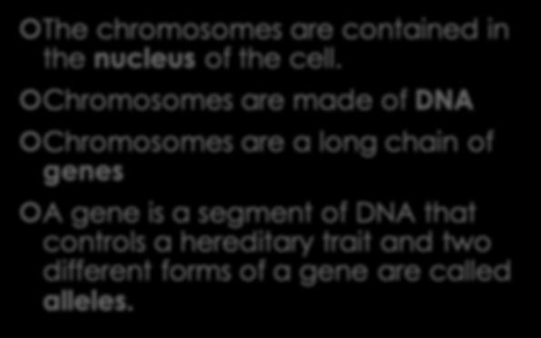 Genes and Chromosomes The chromosomes are contained in the